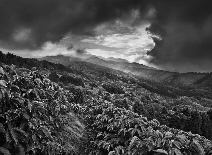Griot-Magazine1-Profumo-di-sogno-© sebastiao-salgado-contrasto-editore-mostra a venezia_Coltivazioni di caffè Llano Bonito de Sarcero, Regione Centrale, Costa Rica 2013