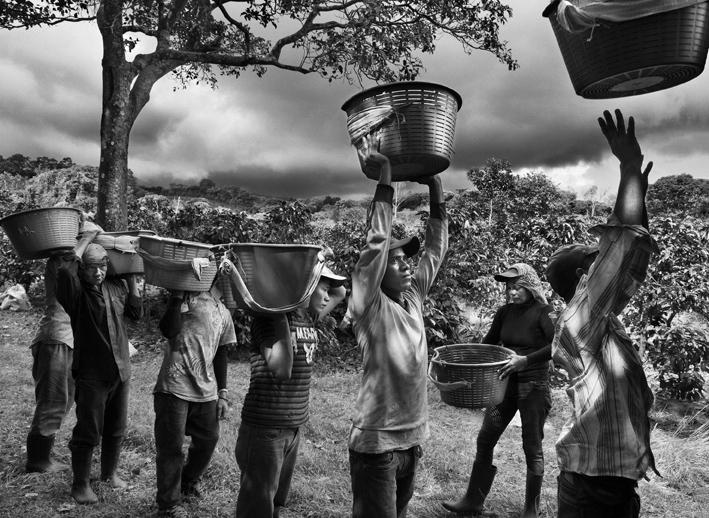 Griot-Magazine1-Profumo-di-sogno-© sebastiao-salgado-contrasto-editore-mostra a venezia_Raccoglitori di caffè. Finca la Hilda sulle pendici del vulcano Poas, regione San José, Costa Rica 2013