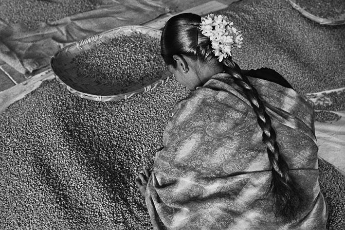 Griot-Magazine1-Profumo-di-sogno-© sebastiao-salgado-contrasto-editore-mostra a venezia_Selezione del caffè di alta qualità per l'esportazione. Allana Coffe Curing Works. Stato di Karnataka, India 2003